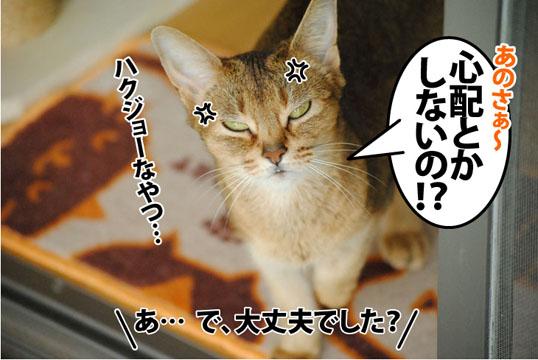 20120530_04.jpg