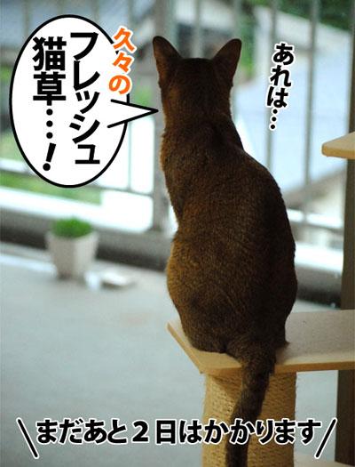 20120604_01.jpg