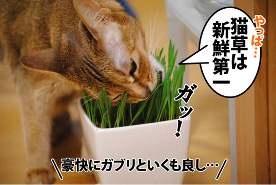 20120604_05.jpg