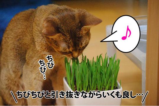 20120604_06.jpg