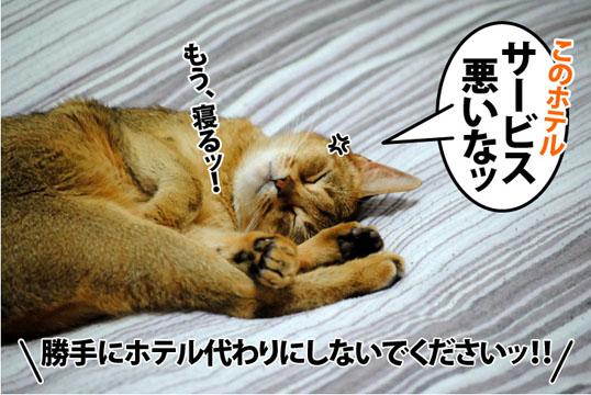20120614_04.jpg