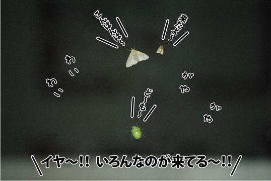20120621_01.jpg