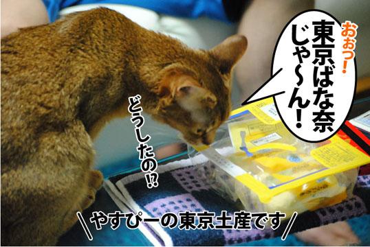 20120627_01.jpg
