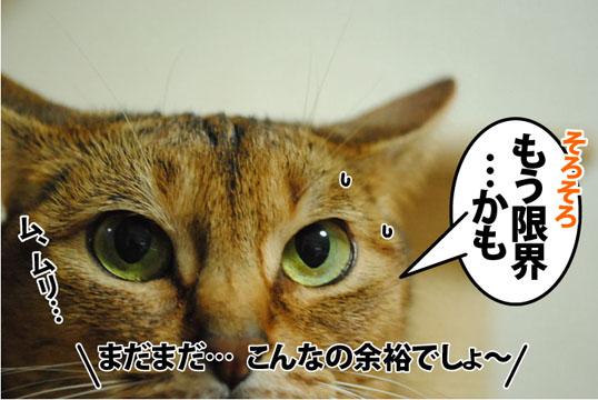 20120705_03.jpg