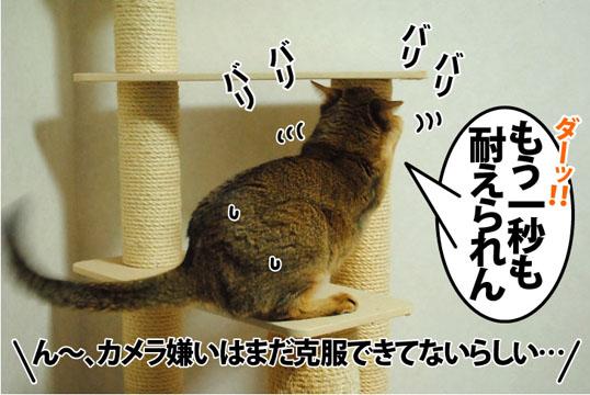 20120705_04.jpg