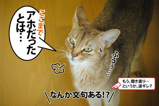 20120712_05.jpg