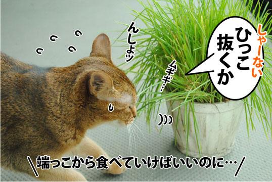 20120717_03.jpg