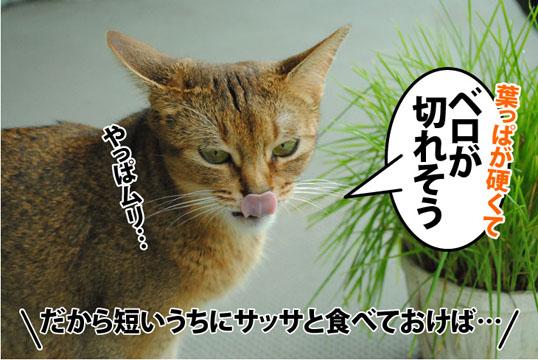 20120717_04.jpg