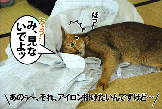 20120719_02.jpg