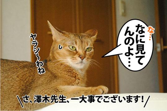 20120725_01.jpg