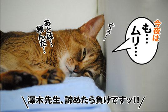 20120803_01.jpg