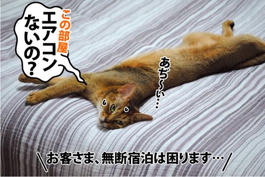 20120805_01.jpg