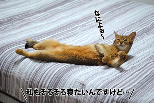 20120808_01_01.jpg