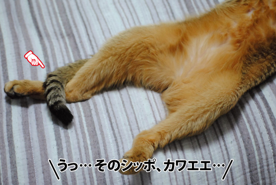 20120808_01_02.jpg