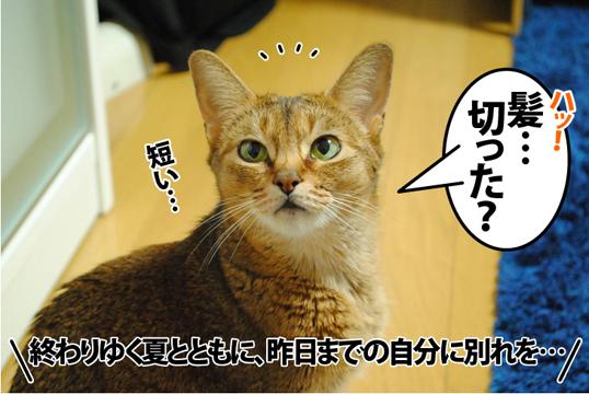 20120824_01.jpg