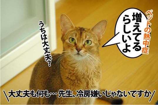 20120826_01.jpg