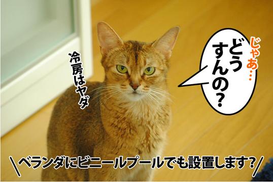 20120826_03.jpg