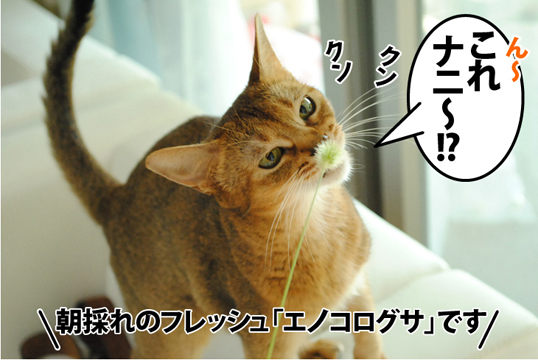 20120907_01.jpg
