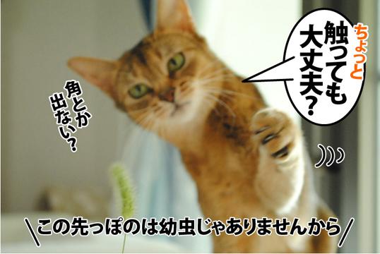20120907_02.jpg