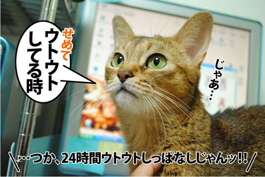 20120919_04.jpg