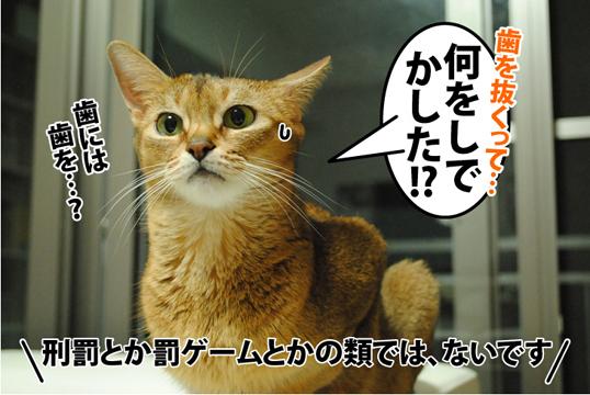 20120928_02.jpg