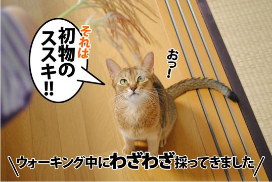 20121002_01.jpg