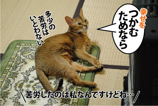 20121103_03.jpg