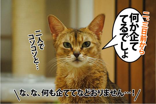 20121108_01.jpg