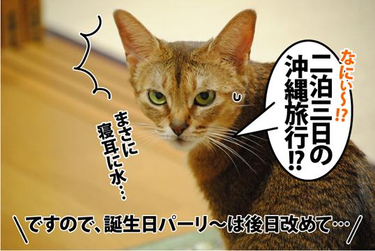 20121108_04.jpg