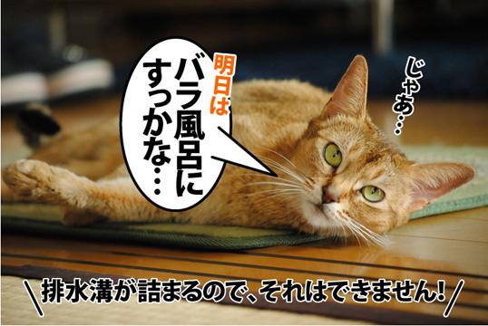 20121124_05.jpg