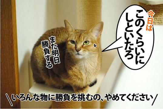 20121129_05.jpg