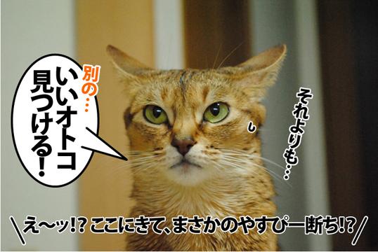 20121221_04.jpg