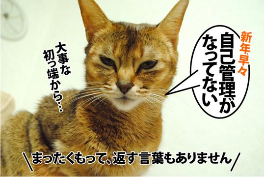 20130115_01.jpg