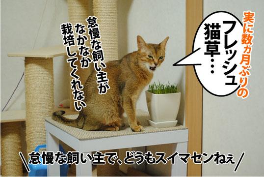 20130131_01.jpg