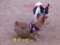蜀咏悄+(13)_convert_20130113203732