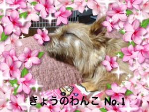 蜀咏悄+(22)_convert_20130307004335