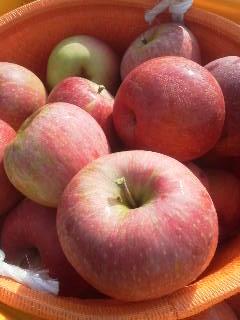 りんご10