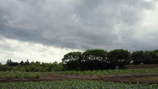 kurohosibyou1.jpg