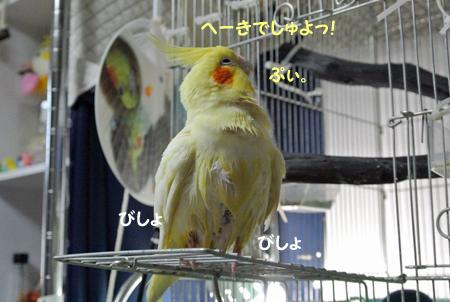 2012 06 21_hck_0222_edited-1