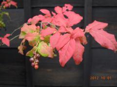 秋の実 2 s
