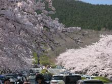 とまの気ままな日記-富士霊園1