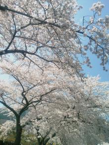 とまの気ままな日記-富士霊園2