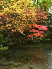 とまの気ままな日記-京極のふきだし湧水