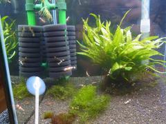 移動水槽 抱卵の舞です