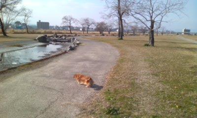 散歩に出た
