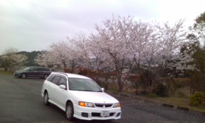 雨の桜もいいね