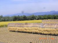 H240927秋の農村風景