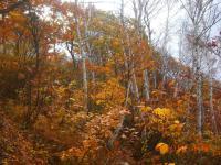 H241107斑尾高原の紅葉
