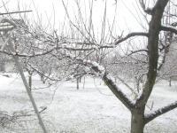 H250215剪定中に雪降り