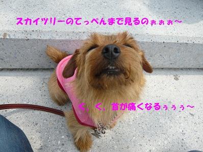 2012_0507_113041-P1050965a.jpg